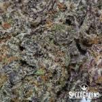 Purple Skunk AAA 4