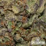 yoda_og_aaa-4-cannabis_optimized