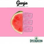 Ganja-Bears-Watermelon-3