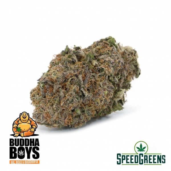 Slurricane-AAAA-buddha-cannabis