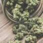 cannabis online canada