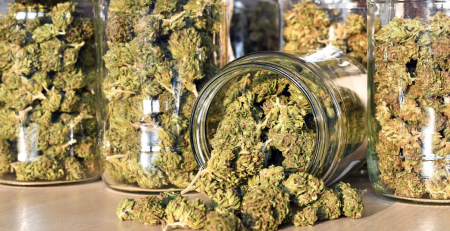 curing marijuana buds