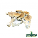 B+mushroom