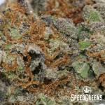 TomFordPinkKush_aaa+-4-cannabis