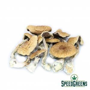 african_dried_mushroom-dried-mushroom