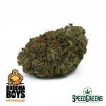 black_tuna_aaaa1c-cannabis