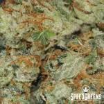 bluefin_tuna_kush_smalls_aaaa-4-cannabis