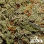lemon-og-kush-aaa-cannabis-4