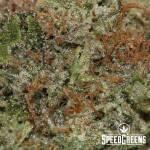 rockstar_craft_top_shelf-4-cannabis